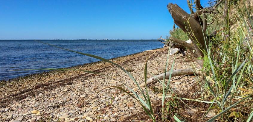 Strandlinje med vatten mot en klarblå himmel.