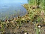 Erosionsskydd, strand, grönska, sand, vatten, sten, vass.
